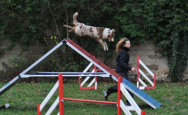 A propos de la classe canine, éducateur comportementaliste canin