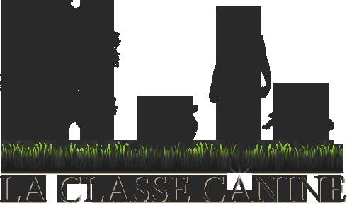 La Classe Canine, Éducateur Comportementaliste Canin à Malintrat, proche de Clermont-Ferrand